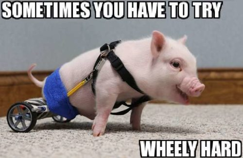 try-wheely-hard